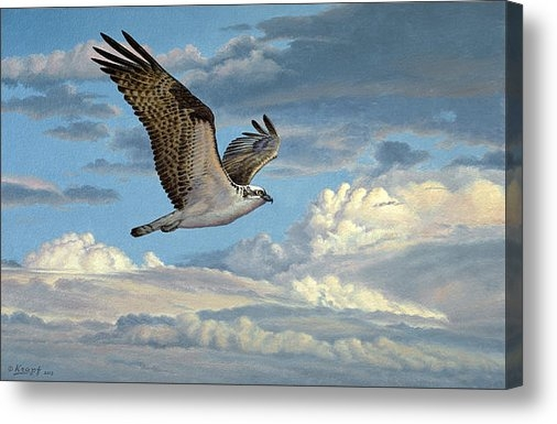 Paul Krapf - Osprey in the Clouds Print