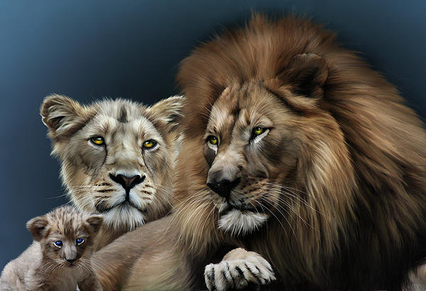 Julie L Hoddinott - Lion Family Print
