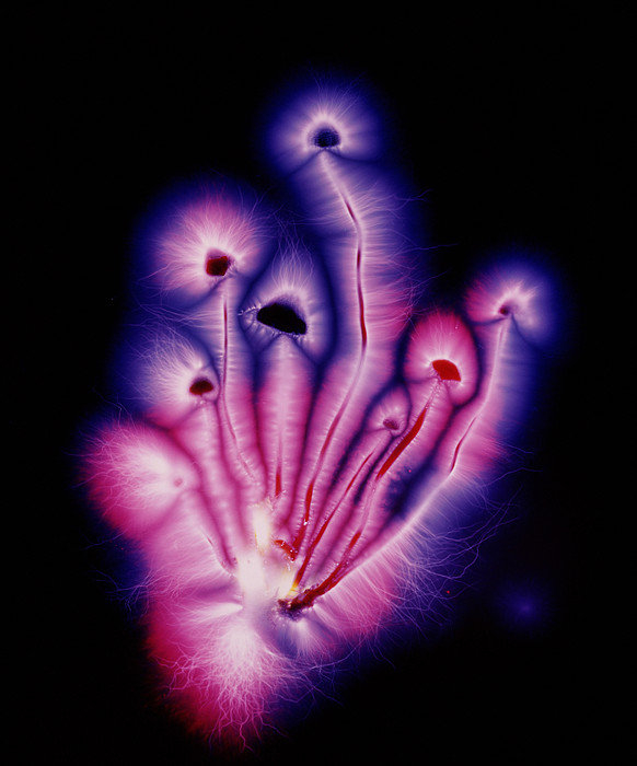 Garion Hutchings - Kirlian Photograph Of Lib... Print