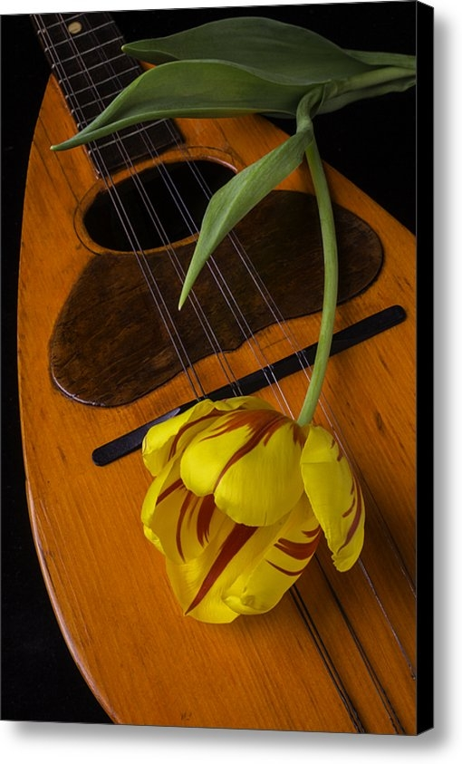 Garry Gay - Mandolin With Red And Yel... Print