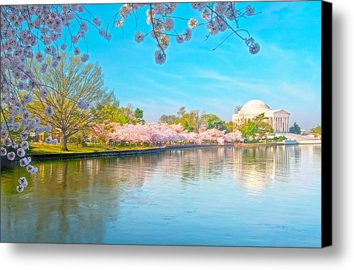 Steven Barrows - Cherry Blossoms from Shad... Print