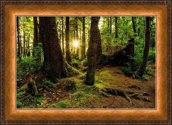 Chad Dutson - Rainforest Path Print