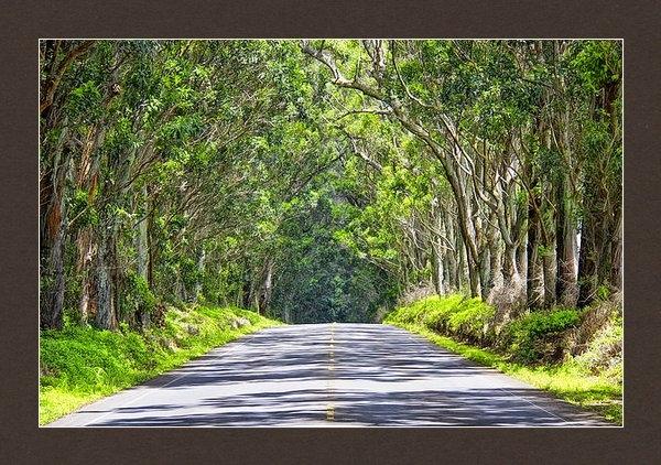 Mike Orso - Tree Tunnel  Kauai  Print