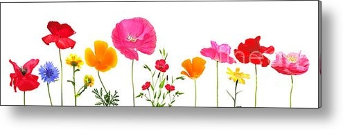 Susan Wall - Variety Of Meadow Flowers Print