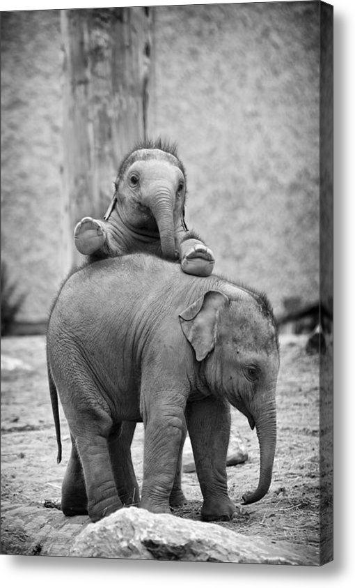 Gary Brookshaw - Elephant Fun Print