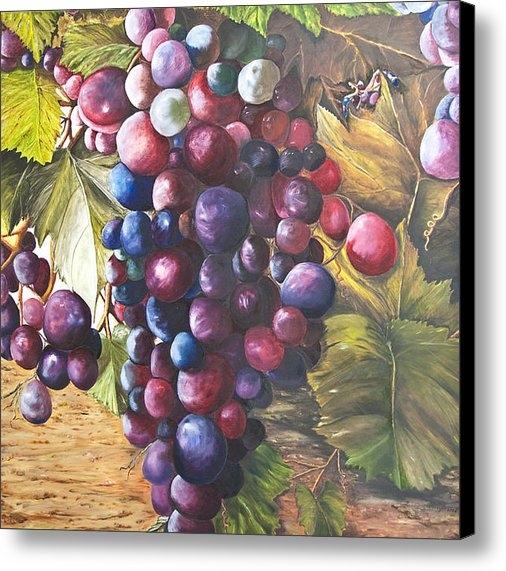Chuck Gebhardt -  Wine Grapes On A Vine Print
