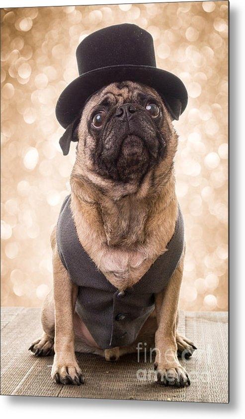 Edward Fielding - A Star Is Born - Dog Groo... Print