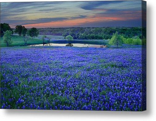 Jon Holiday - Bluebonnet Lake Vista Tex... Print