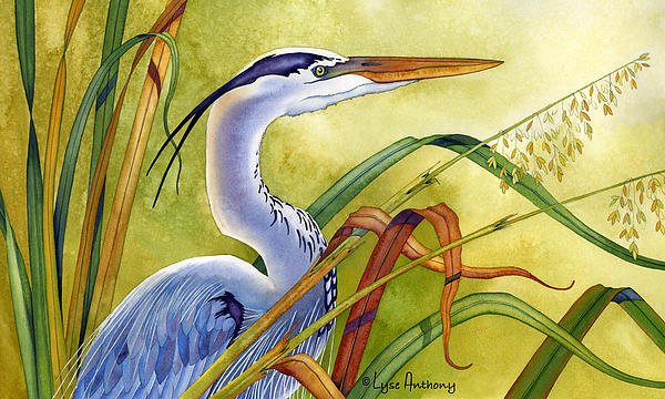 Lyse Anthony - Great Blue Heron Print