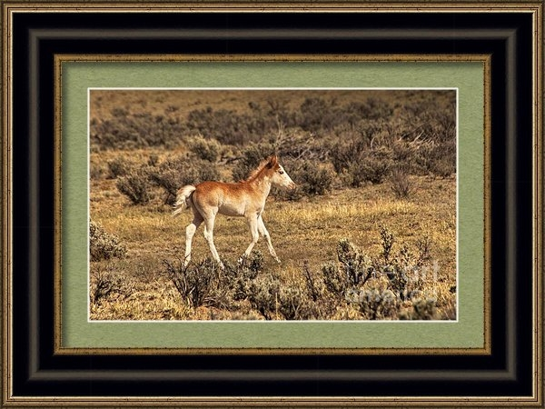 Jerry Cowart - Cute Colt Wild Horse On N... Print
