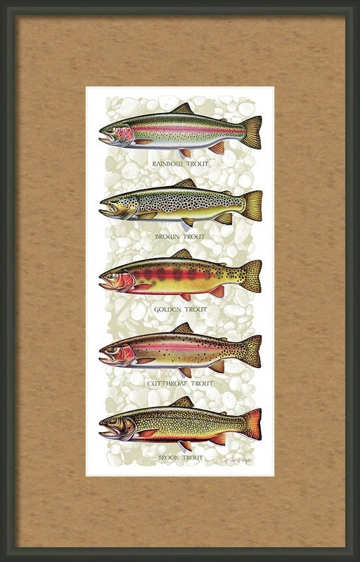 JQ Licensing - Five Trout Panel Print
