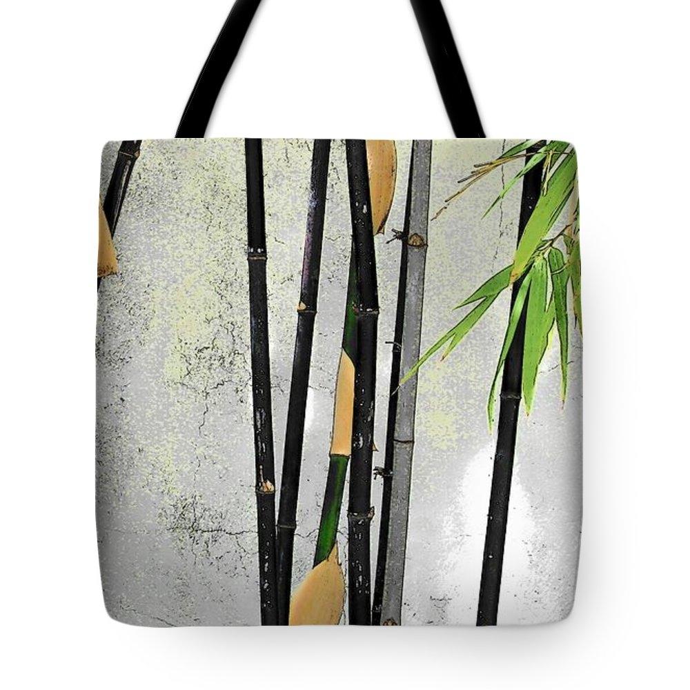 Strangefire Art       Scylla Liscombe - Black Bamboo Image 2 Sara... Print
