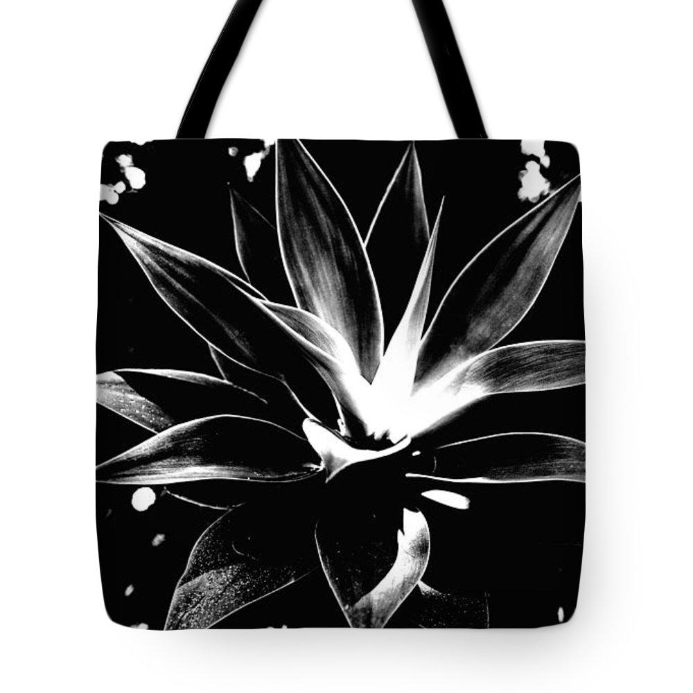 Rebecca Harman - Black Cactus  Print