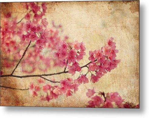 Rich Leighton - Cherry Blossoms Print