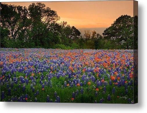 Jon Holiday - Texas Sunset - Bluebonnet... Print