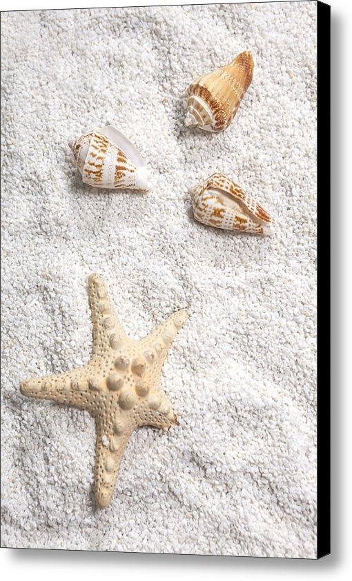 Joana Kruse - Sea Shells Print