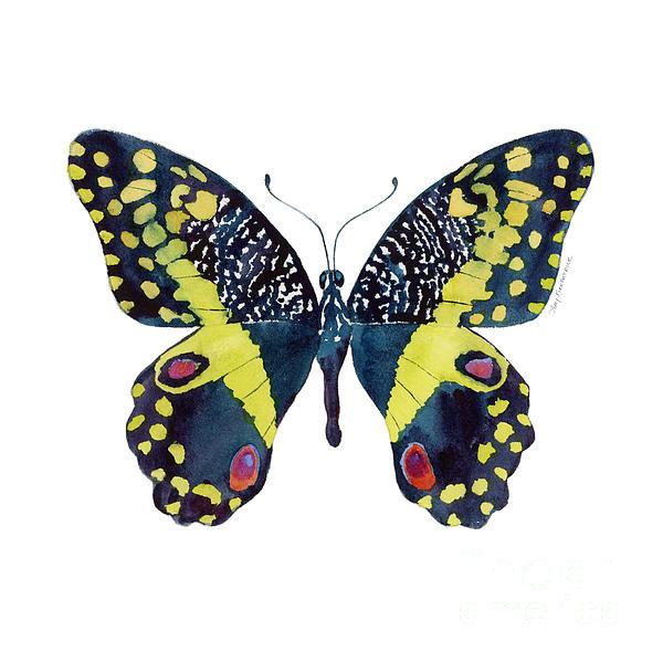 Amy Kirkpatrick - 73 Citrus Butterfly Print