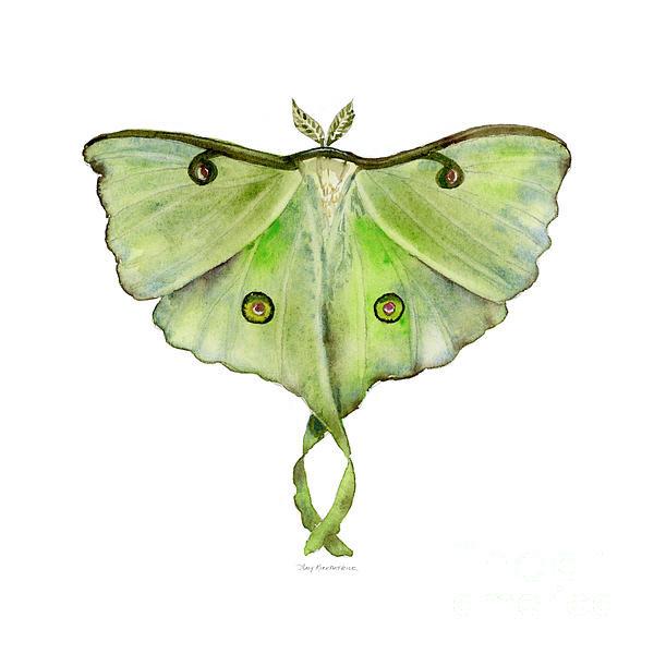 Amy Kirkpatrick - 100 Luna Moth Print