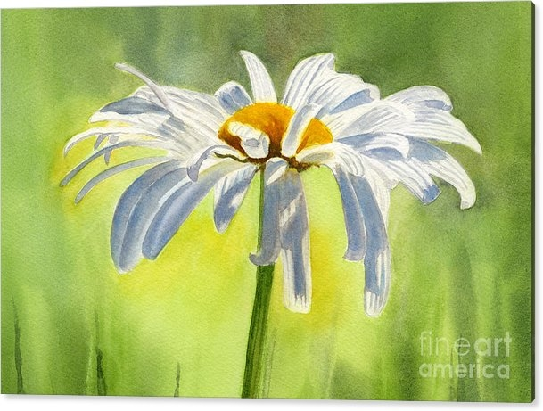 Sharon Freeman - Single White Daisy Blosso... Print