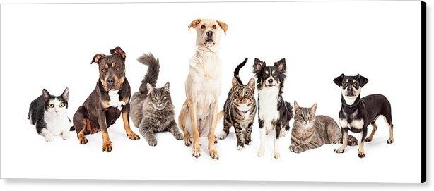 Susan  Schmitz - Large Group of Cats and D... Print