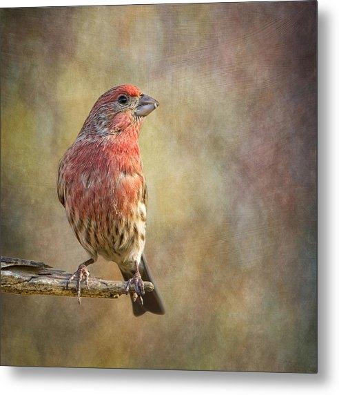 Bill Tiepelman - A Finch With Flair Print