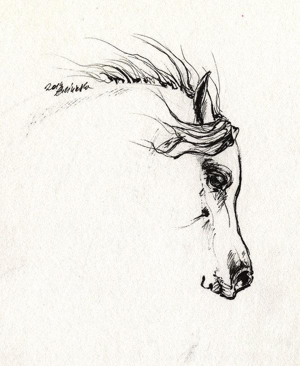 Angel  Tarantella - Arabian horse sketch 2014... Print