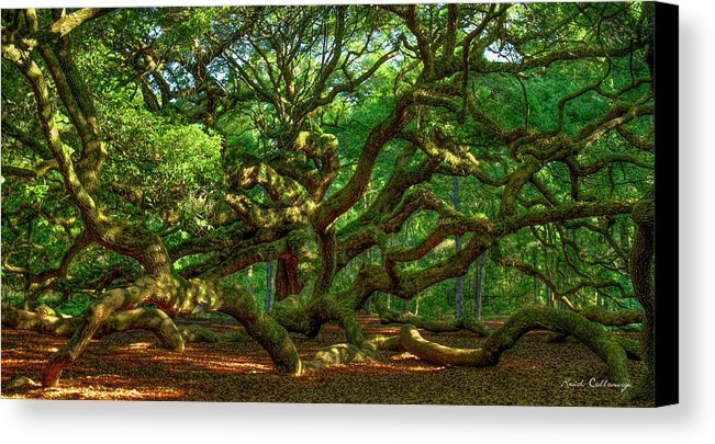 Reid Callaway - Angel Oak Morning Shadows... Print