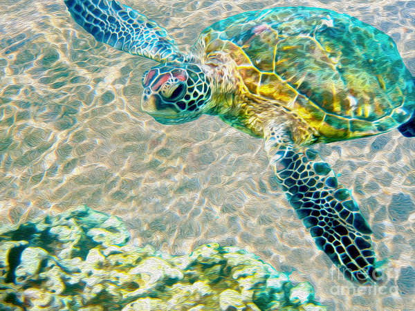 Jon Neidert - Beautiful Sea Turtle Print