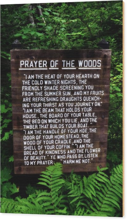Michelle Calkins - Prayer of the Woods Print