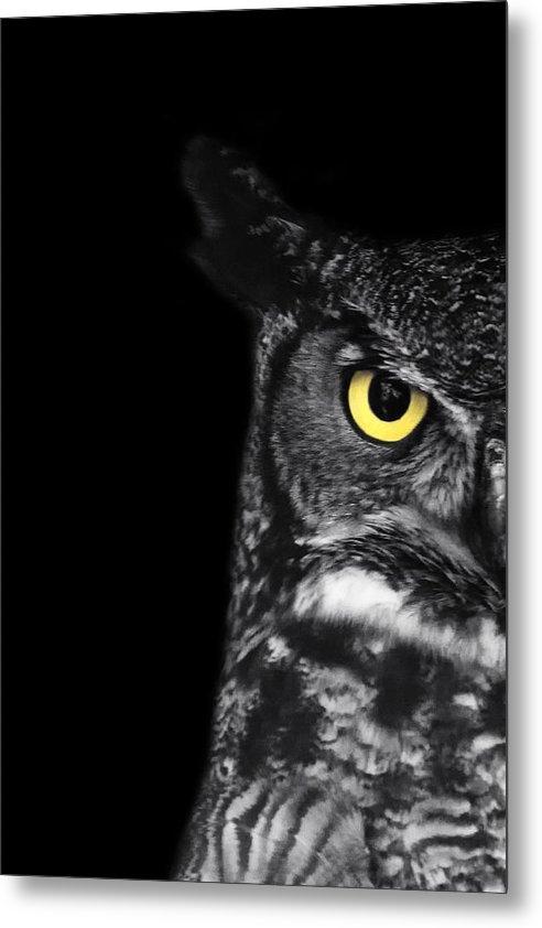 Stephanie McDowell - Great Horned Owl Photo Print