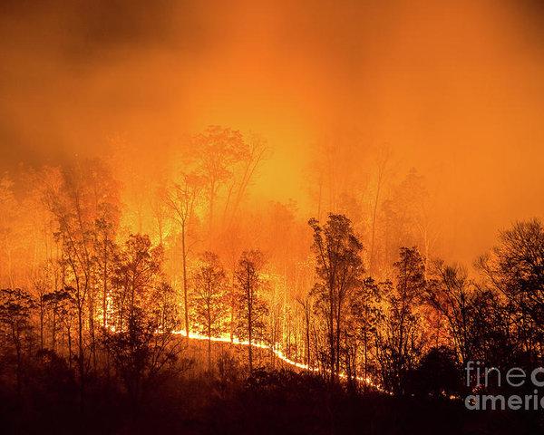 Anthony Heflin - Kentucky Wildfire Print