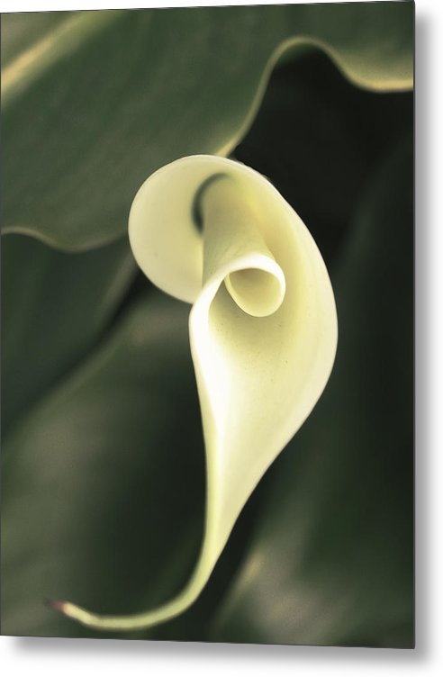 Karen  W Meyer - Flower Lily Print
