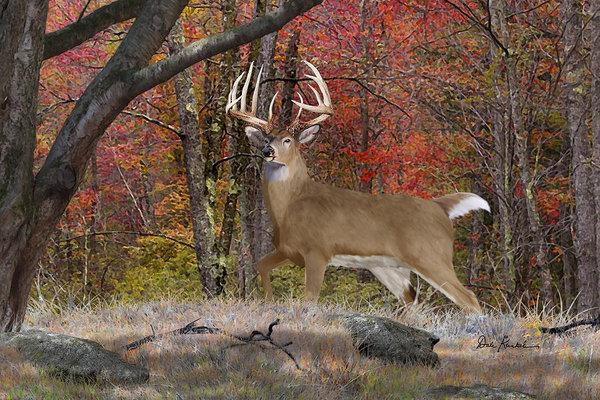 Dale Kunkel Art - Deer Art - Rambo Print
