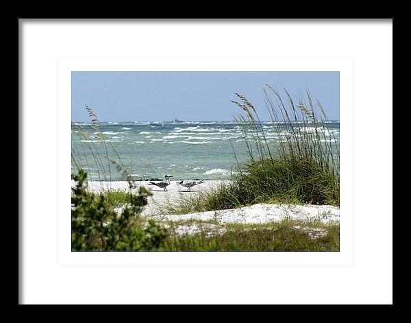Larry Allan - Royal Terns on a Sarasota... Print