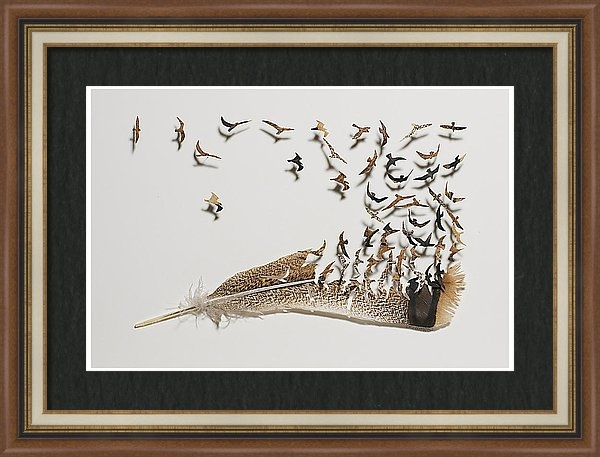 Chris Maynard - Where Feathers Come From Print