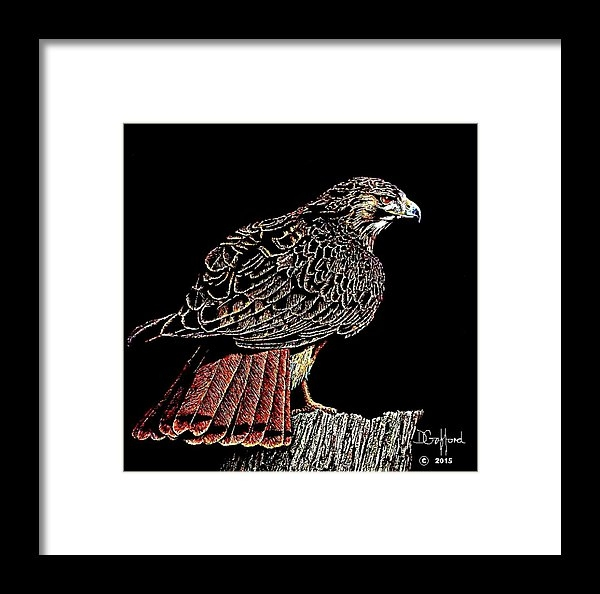 Dave Gafford - Red Tail Hawk Print