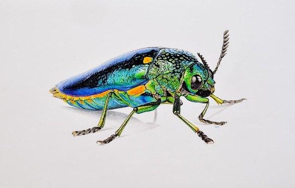 Biophilic Art - Jewel Beetle Print