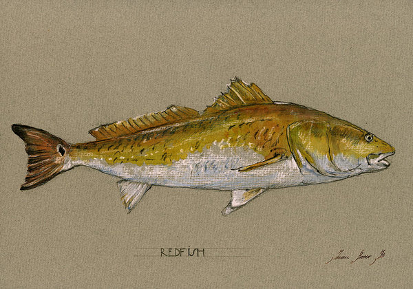 Juan  Bosco - Redfish painting