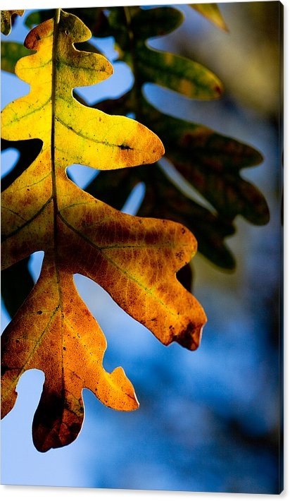 Matt Suess - Fall foliage leaf near Ruidoso NM