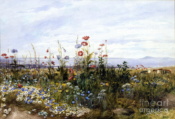Celestial Images - Wildflowers with a View of Dublin Dunleary