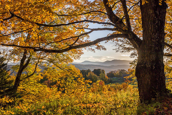 Tim Kirchoff - Vermont Framed in Gold