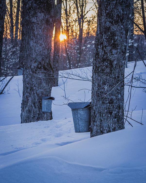 Tim Kirchoff - Winter Buckets
