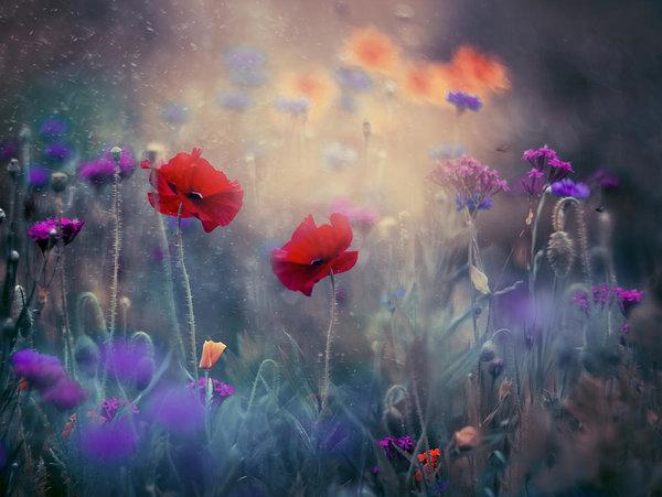 Magda  Bognar - Monet's Garden II