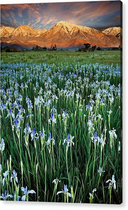 Peter Kunasz - Flower Field