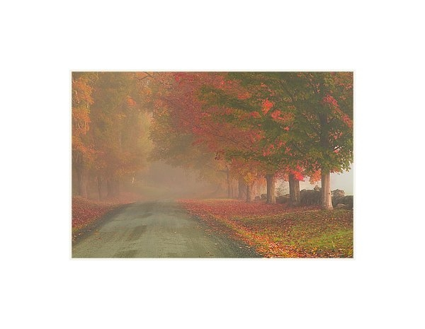 Jeff Folger - Foggy morning on Cloudland road