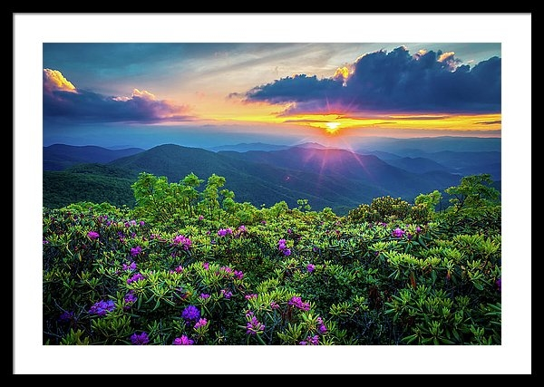 Robert Stephens - Blue Ridge Parkway NC Flowering Craggy