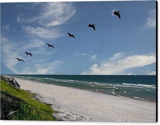 Phil Jensen - Flight of the Pelicans