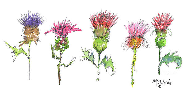 Kathleen McElwaine - What Is It about A Thistle