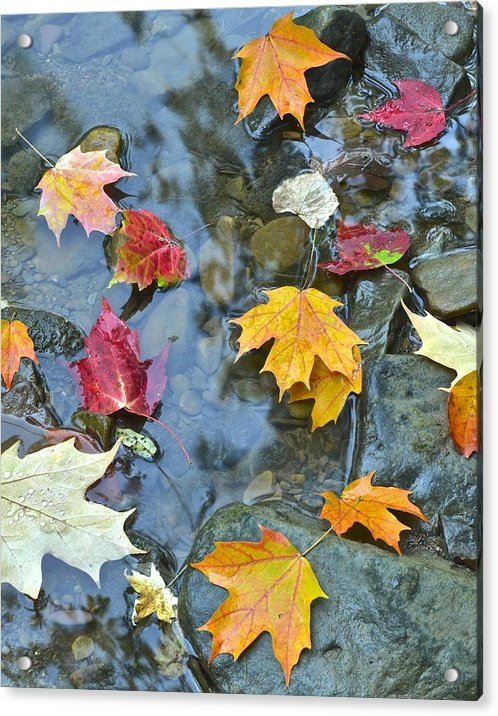 Frozen in Time Fine Art Photography - Autumn Leaves