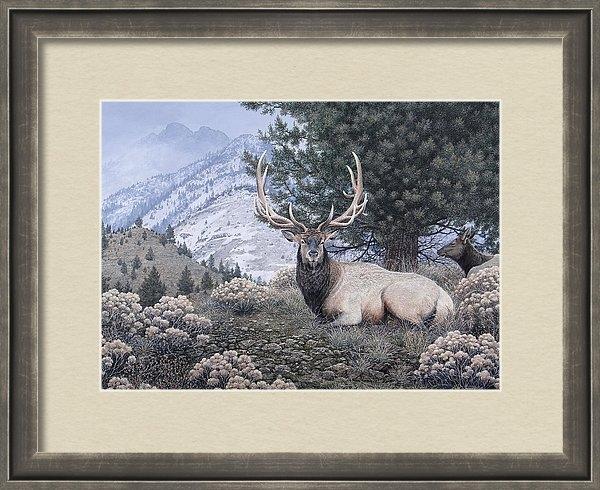 Mike Stinnett - Fields Peak Elk